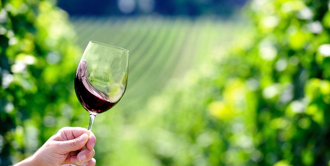 produit-degustation-vignes