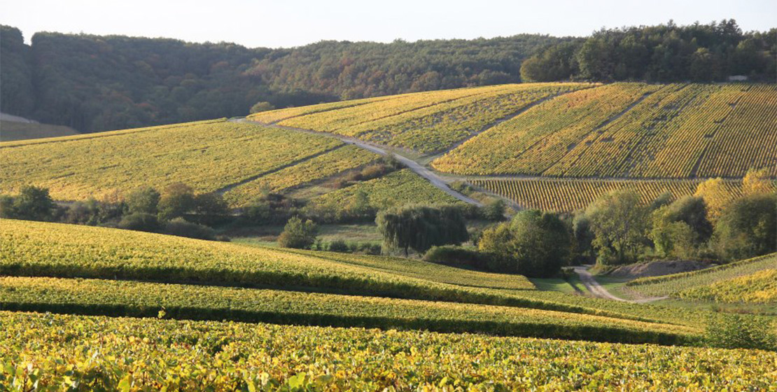 photo-chablis-04